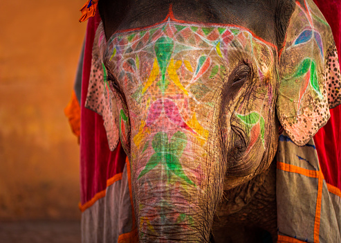 Rajasthan「Decorated Indian Elephant」:スマホ壁紙(16)