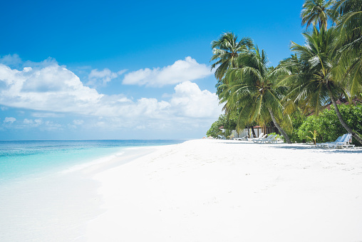 ヤシの木「Maledives, Ari Atoll, view to empty dream beach with palms and beach loungers」:スマホ壁紙(1)