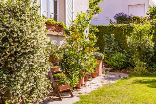 Germany, Stuttgart, potted plants in front of house:スマホ壁紙(壁紙.com)