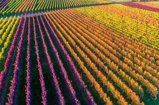 紅葉「Germany, Stuttgart, aerial view of vineyards at Kappelberg in autumn」:スマホ壁紙(2)