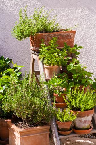 Herb Garden「Germany, Stuttgart, Potted herbs in garden」:スマホ壁紙(19)