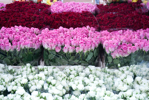 Rose「Rows of Pink, Red and White roses for sale in marketplace」:スマホ壁紙(4)