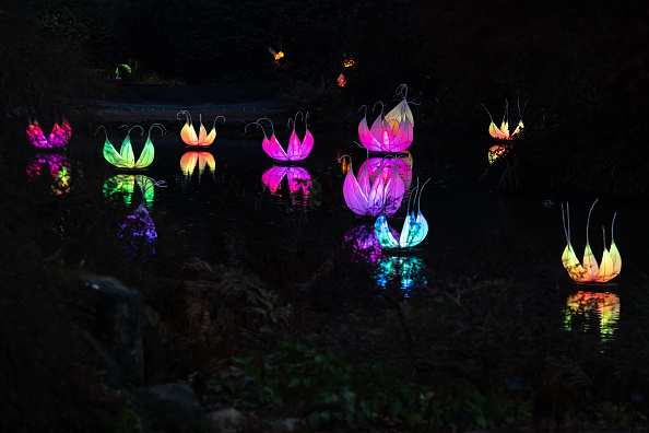 Lighting Equipment「Wakehurst Christmas Lantern Walk Launch」:写真・画像(12)[壁紙.com]