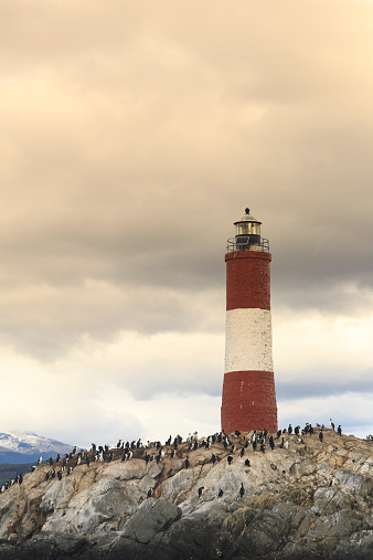 Magellan Penguin「Argentina, Fireland (Tierra del Fuego), Ushuaia」:スマホ壁紙(7)
