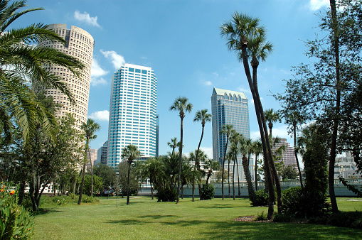Fan Palm Tree「Downtown Tampa - From Plant Park」:スマホ壁紙(8)