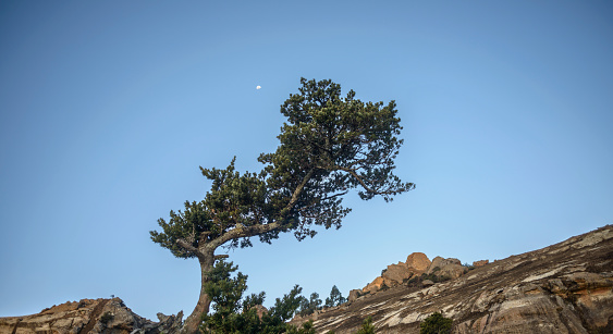 Basalt「A flourishing tree growing incongruously out of a giant boulder in the Northern Drakensberg, Witsieshoek, Kwazulu-Natal, South Africa. The late afternoon moon is also making an appearance.」:スマホ壁紙(0)