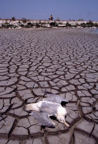 Environmental Conservation「River Acheloos Dam Project」:写真・画像(8)[壁紙.com]