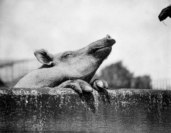 Wild Boar「Lovely Smell」:写真・画像(2)[壁紙.com]