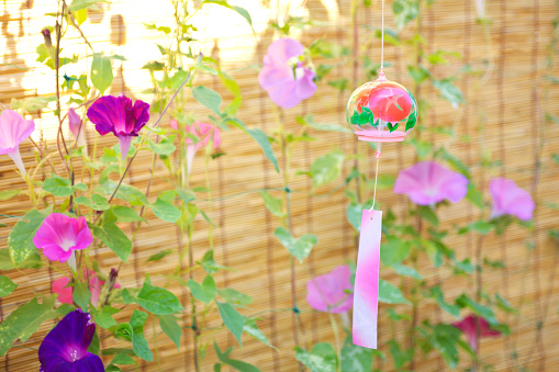 朝顔「Windchime and Morning Glory Flowers」:スマホ壁紙(17)