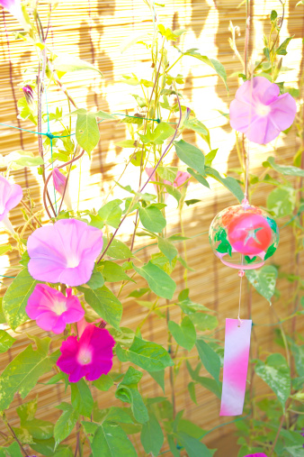 Morning Glory「Windchime and Morning Glory Flowers」:スマホ壁紙(3)