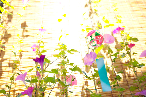 朝顔「Windchime and Morning Glory Flowers」:スマホ壁紙(18)