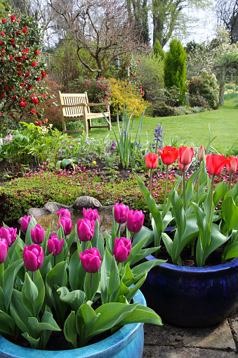Arch - Architectural Feature「Bright tulips in English domestic garden.」:スマホ壁紙(6)