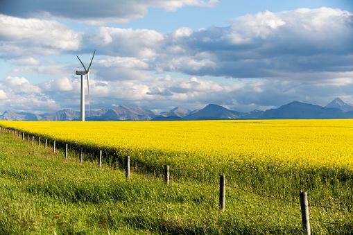 Canola「Wind Turbine Pincher Creek Alberta」:スマホ壁紙(15)