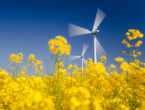 Focus On Background「Wind turbines in yellow field. Sustainable energy. Polarized blue sky.」:スマホ壁紙(10)