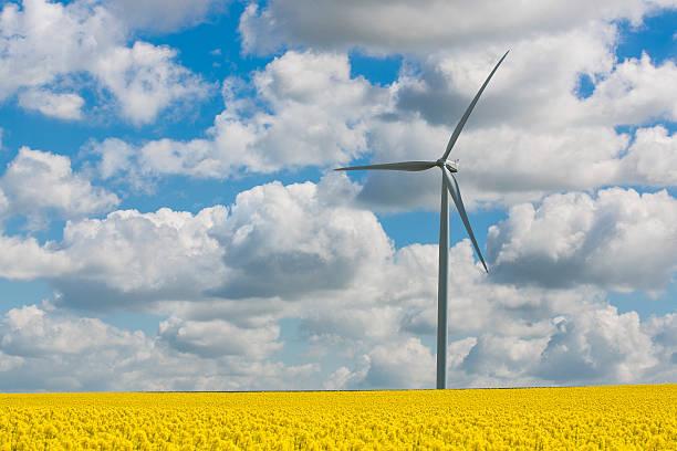 Wind turbine in rapeseed field, Reims, France:スマホ壁紙(壁紙.com)