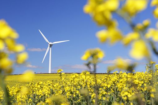 Wind Turbine「Wind turbine in rapeseed field」:スマホ壁紙(1)