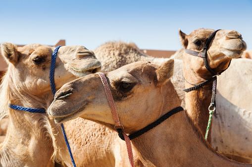 Working Animal「UAE, Al Ain, Detail」:スマホ壁紙(12)