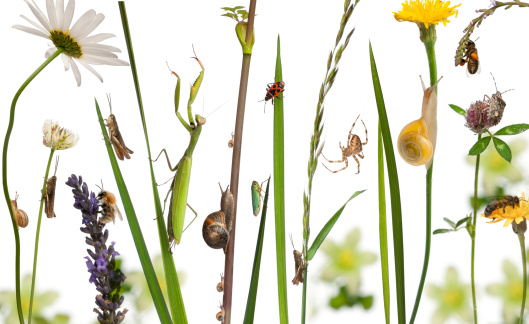 snails「Pastoral composition of flowers and insects」:スマホ壁紙(11)