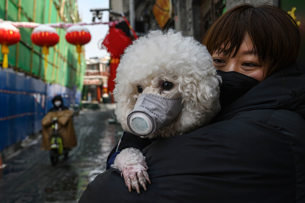 Dog「Concern In China As Mystery Virus Spreads」:写真・画像(0)[壁紙.com]