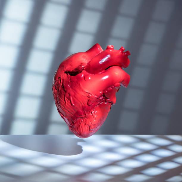 Human heart model:スマホ壁紙(壁紙.com)