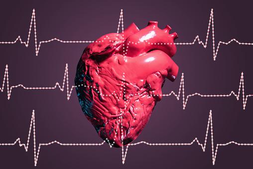 Heart「Human heart and pulse traces」:スマホ壁紙(7)