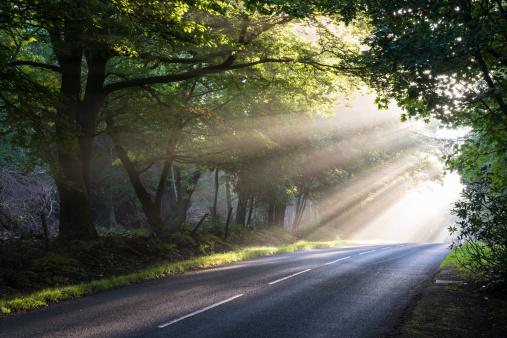 ������「Morning sun rays falling on forest road」:スマホ壁紙(5)