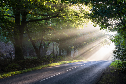 Twilight「Morning sun rays falling on forest road」:スマホ壁紙(10)