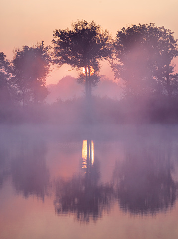 North Brabant「Morning sunrise shining through trees at lake」:スマホ壁紙(12)