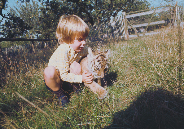 動物「Howletts Zoo」:写真・画像(4)[壁紙.com]