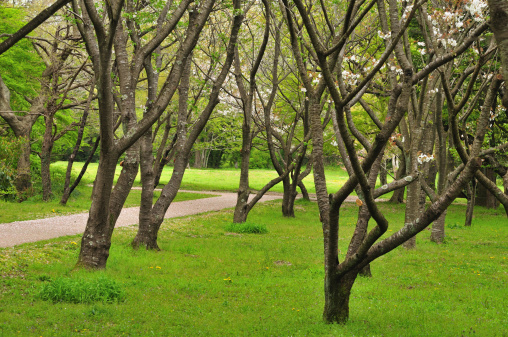 Spring Collection「Park in spring」:スマホ壁紙(14)