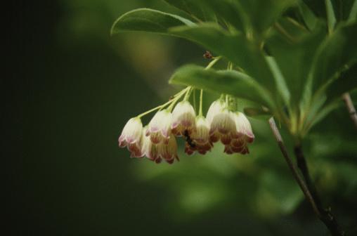 Drooping「Drooping flowers」:スマホ壁紙(14)