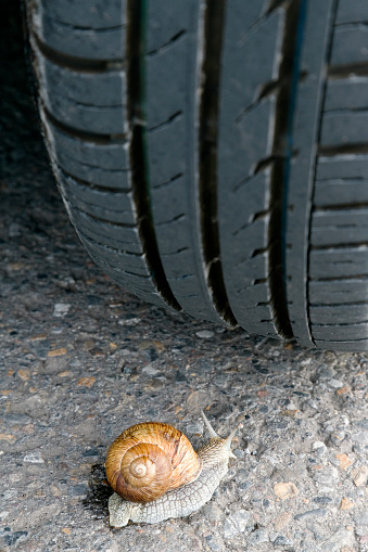 snails「Snail close-up Crawling on Road in Front of Tire」:スマホ壁紙(7)
