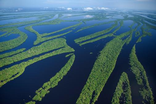 Amazon River「 Anavilhanas Archipelago, Brazil」:スマホ壁紙(5)
