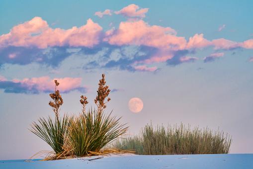 月「Rising Full Moon Over Yuccas」:スマホ壁紙(8)