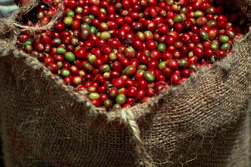 1990-1999「Burlap Sack of Coffee Cherries」:スマホ壁紙(17)