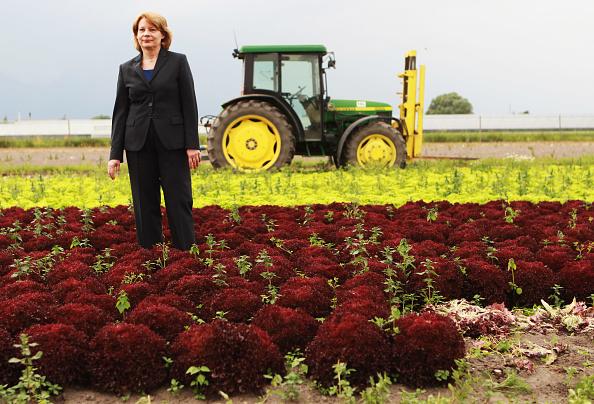 Salad「Farmers Seek Compensation Following EHEC Outbreak」:写真・画像(14)[壁紙.com]