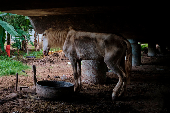 Horse「Jakarta's Traditional Horse Carriages On A Standstill Amid The Coronavirus Pandemic」:写真・画像(19)[壁紙.com]
