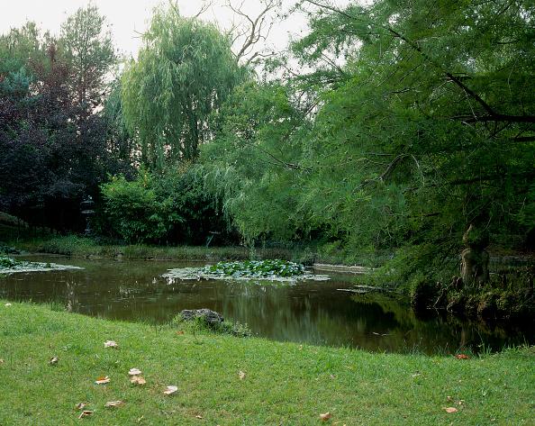 葉・植物「View of plant life growing alongside a pond」:写真・画像(9)[壁紙.com]