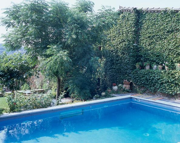 葉・植物「View of plant life growing beside a swimming pool」:写真・画像(1)[壁紙.com]