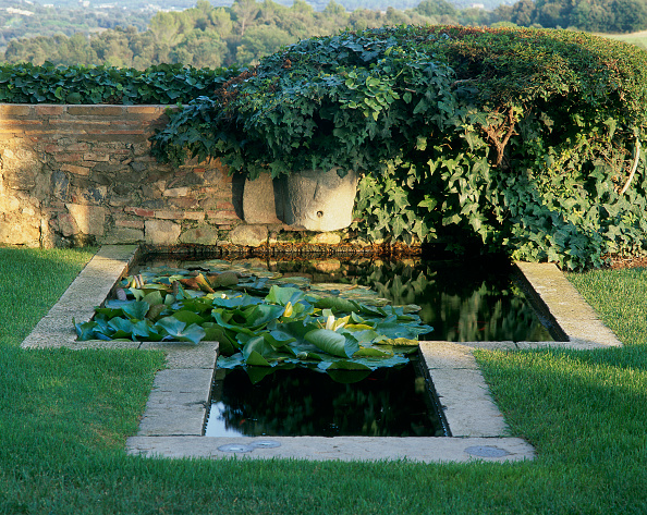 Sunny「View of plants submerged in a pond」:写真・画像(7)[壁紙.com]