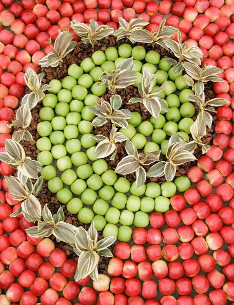 Jeff Brass「Ellerslie Flower Show」:写真・画像(3)[壁紙.com]