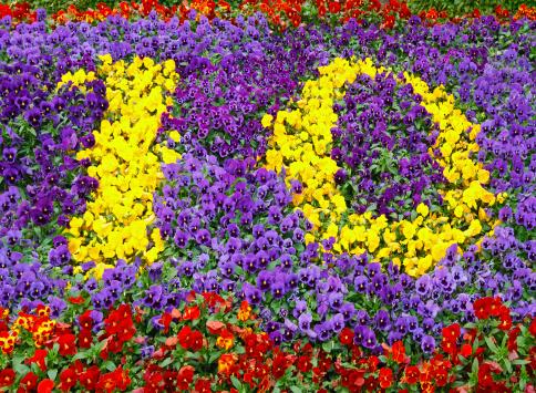 Zero「Flower Number Ten」:スマホ壁紙(15)