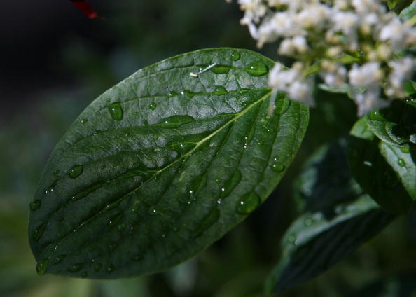 Bay Leaf「East Bay District Faces Likely Water Rationing」:写真・画像(8)[壁紙.com]