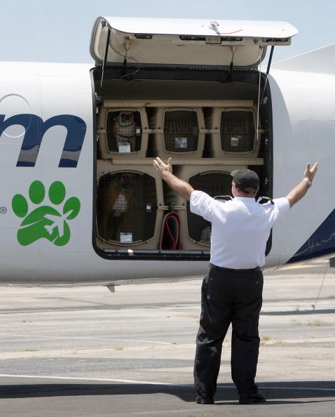 Pet Owner「Airline For Pets Starts Flying In Select US Cities」:写真・画像(6)[壁紙.com]
