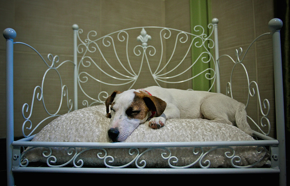 Sleeping「'Actuel Dogs' - Luxury Dogs Hotel Visit」:写真・画像(6)[壁紙.com]