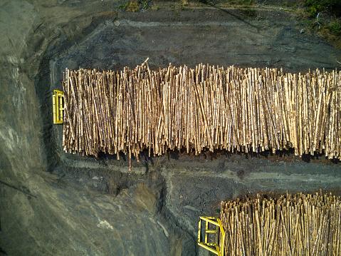 Deforestation「Stacked Tree Trunks in Sawmill」:スマホ壁紙(7)