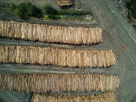 Deforestation「Stacked Tree Trunks in Sawmill」:スマホ壁紙(13)
