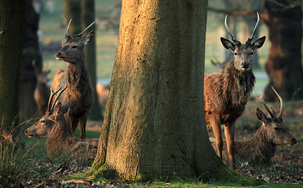 Animal「The UK Adjusts To Life Under The Coronavirus Pandemic」:写真・画像(1)[壁紙.com]