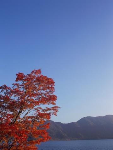 Nikko City「Maple tree, Nikko, Tochigi Prefecture, Japan」:スマホ壁紙(7)