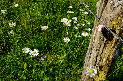 The Nature Conservancy「Flower meadow and fence」:スマホ壁紙(1)